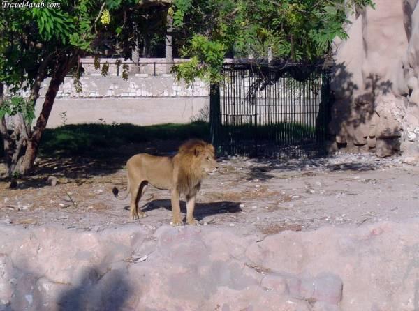 حديقة حيوان الاسكندرية تستقبل زوارها  فى العيد بعرض أوكروباتى