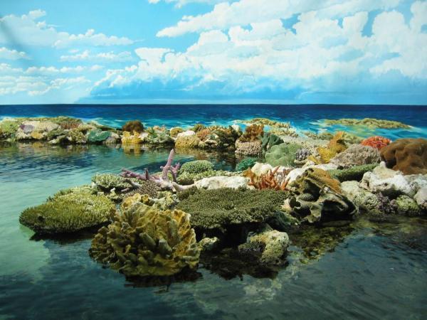 المبيدات الزراعية تهدد الحاجز المرجاني العظيم