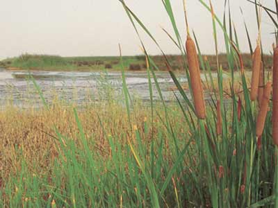 تعاون البيئة والإستعلامات للحد من الآثار السلبية للتلوث وتنمية الوعى البيئى