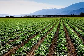 البيئة: يجب تبني سياسة الحفاظ على نوعية الغذاء وعدم اهداره