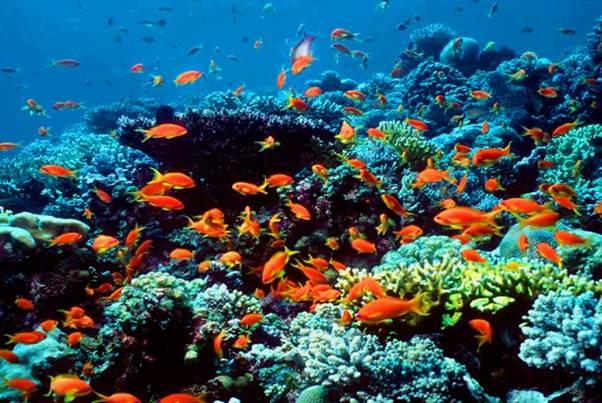 تعاون عربى للنهوض بالمحميات البحرية على المستوى الإقليمى
