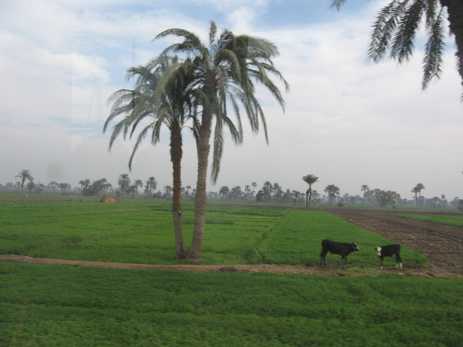 استرداد ربع الرقعة الزراعية المتعدى عليها