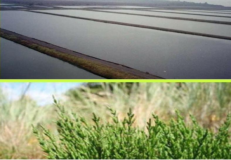 البحر الاحمر تطرح  مشروعين لاقامة مزارع سمكية وزراعة السليكورنيا على 8 آلاف فدان