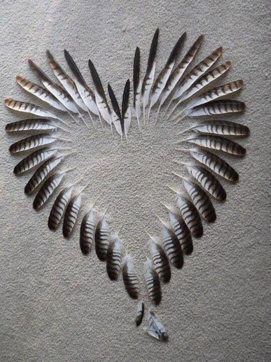 قلب من ريش