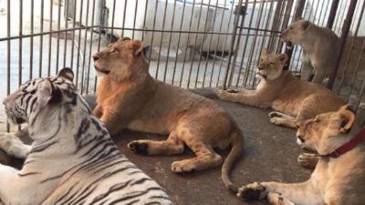 ضبط أكبر مزرعة للحيوانات البرية بدون ترخيص