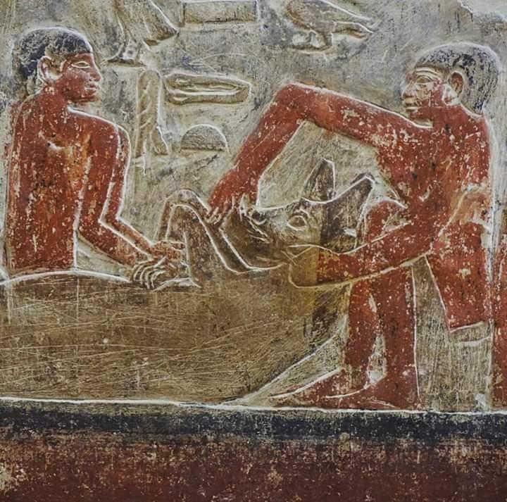 تصوير (حثت) ورمزيته في الفن المصري القديم