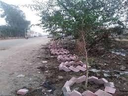 زراعة 1000شجرة بعدد من المقالب العشوائية المرفوع منها القمامة بأوسيم