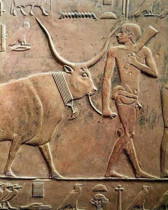 تصوير (الثور) ورمزيته في الفن المصري القديم (ح11)