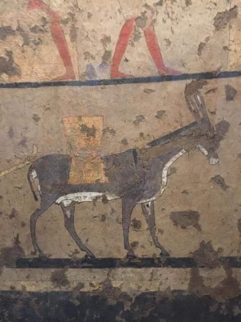 تصوير (الحمار) ورمزيته في الفن المصري القديم